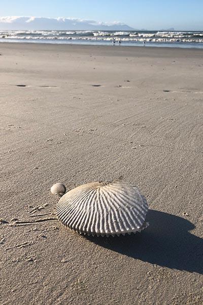 Treasures on Muizenberg beach
