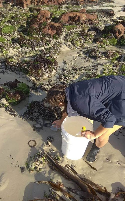 Person with a bucket leaning over investigating a sea anemone.