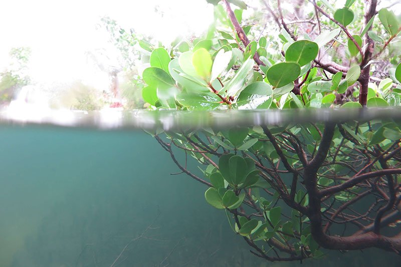 A green plant under water.